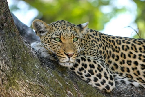 Why To Consider Going On The African Adventures