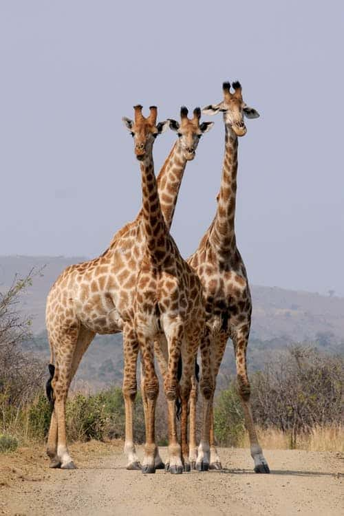 Places To Visit When On The Africa Tours