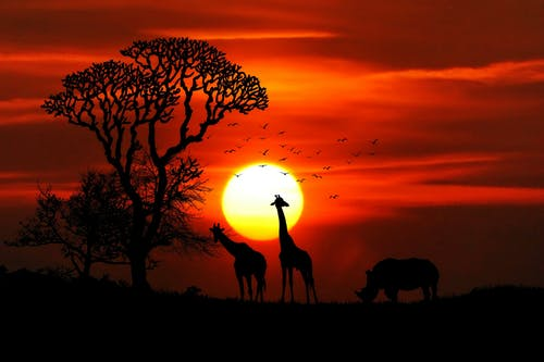 Where To Go On The African Safari Holidays