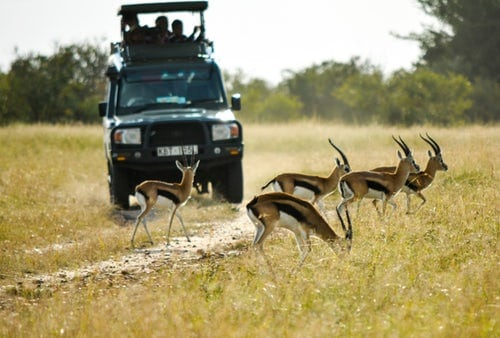 4 Tips For First Time African Safari