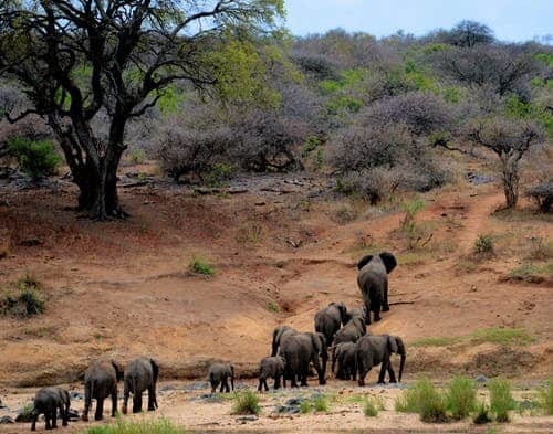 What You Need To Know: South Africa Travel