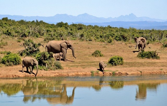 A herd of elephants walking along a river next to a body of water
