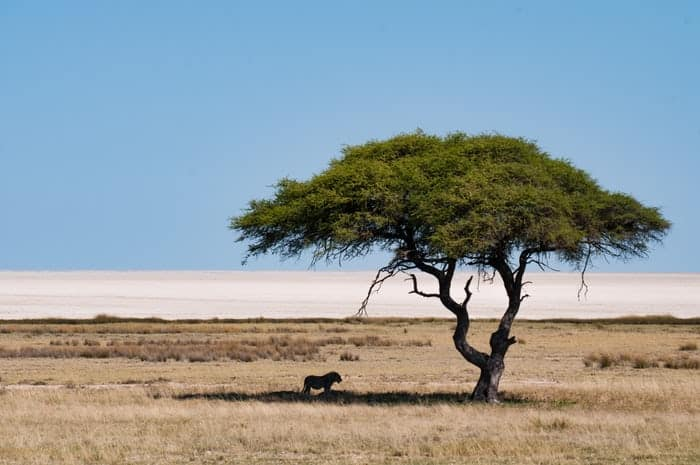 African Adventure Vacation in Namibia