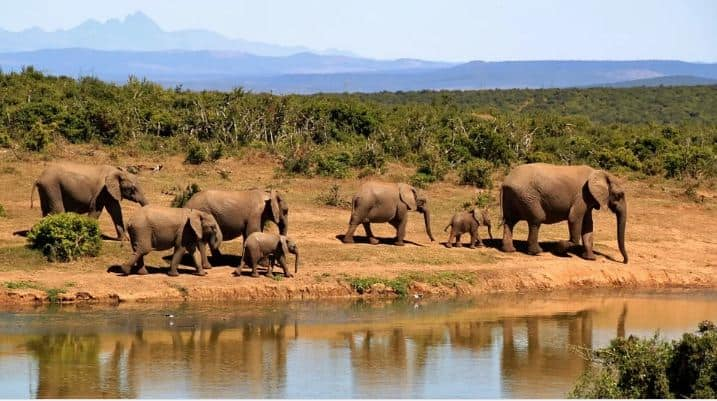 Attractions Of Luxury African Safari Holidays