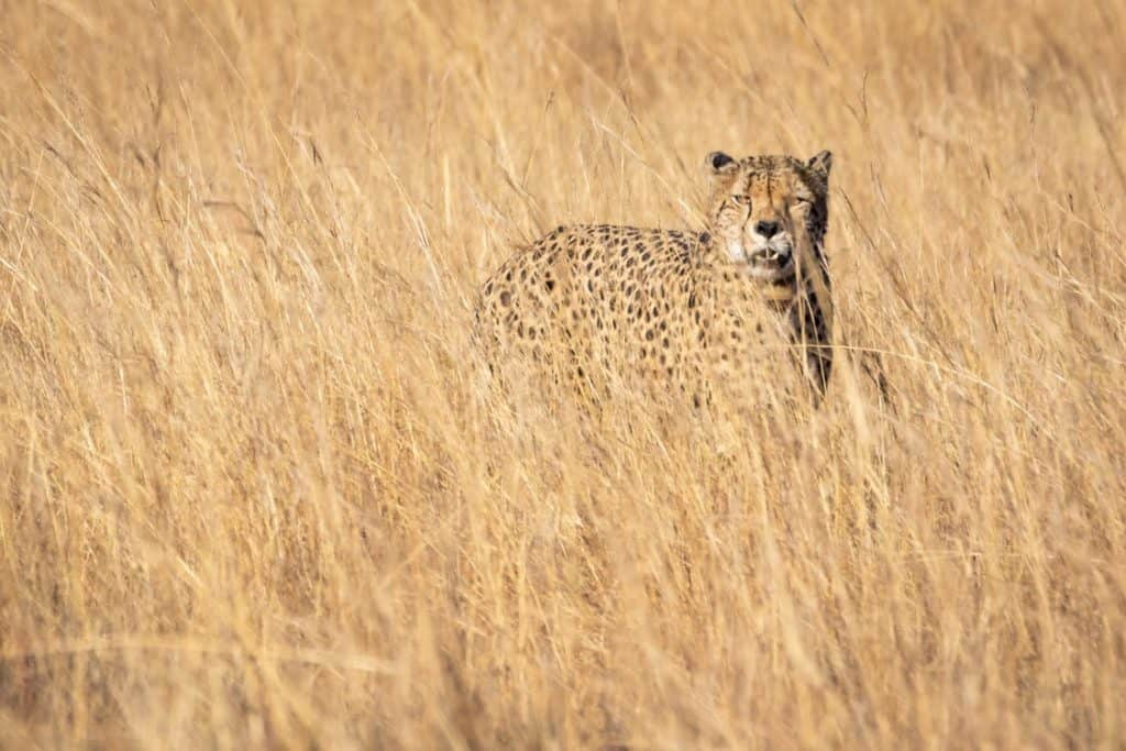 Safari In Africa for a thrilling experience
