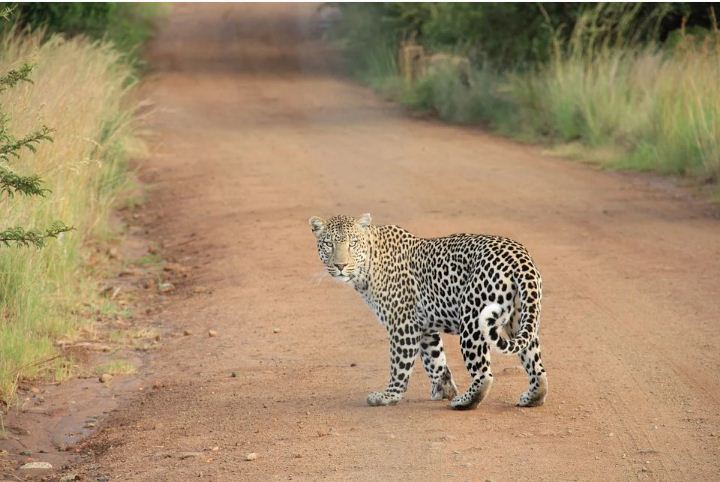 Safari Safety Rules To Follow