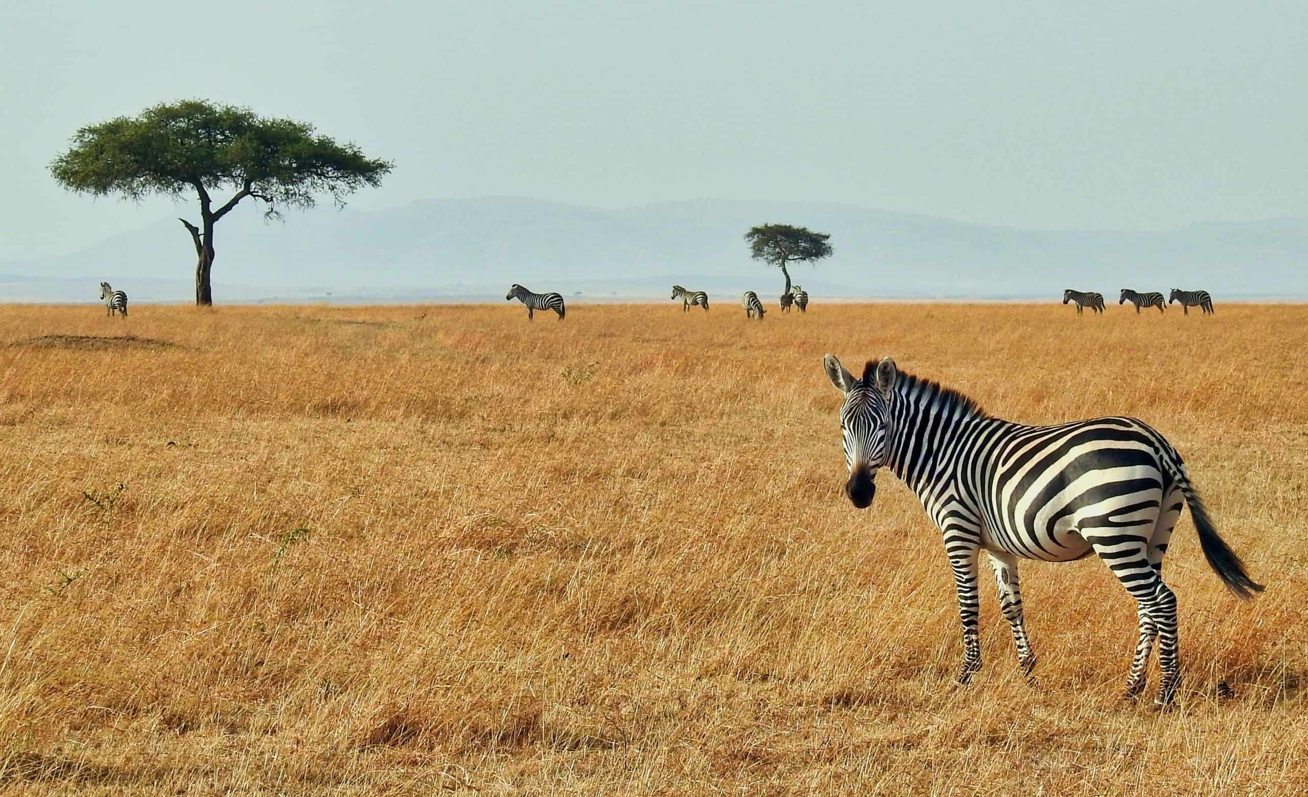 Interesting Facts About African Savannah