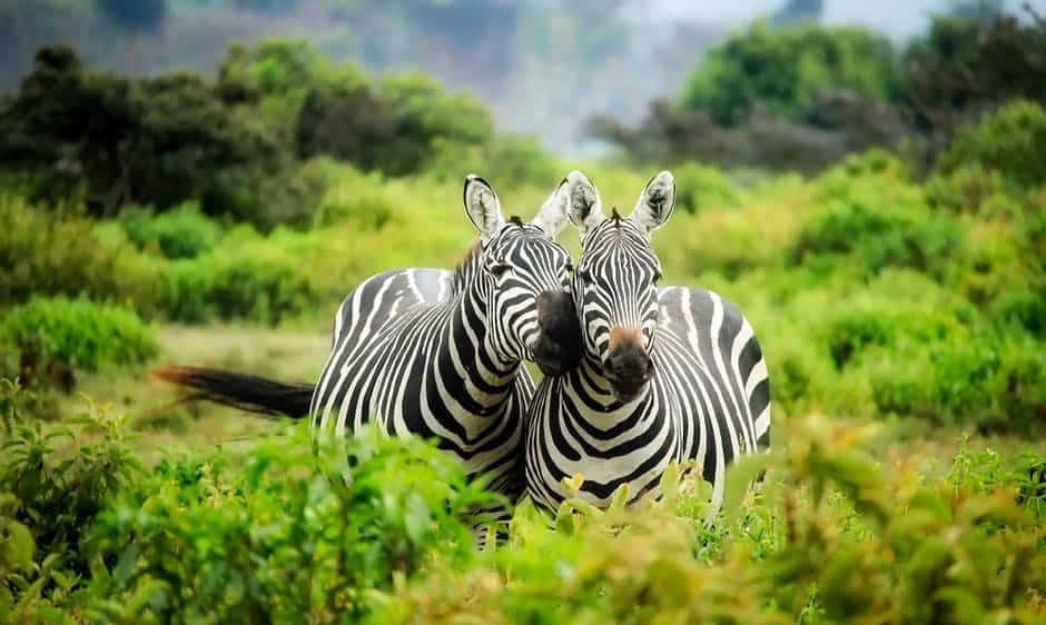 Wildlife in Africa Vacation Spots